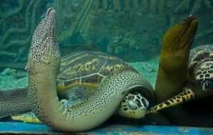 Фауна Южно-Китайского моря