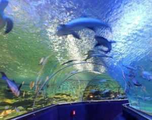 Океанариум в парке Винперл