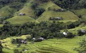 Сельское хозяйство во Вьетнаме