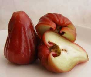 Розовое яблоко или шомпу