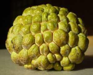 Нойна (сахарное или сметанное яблоко)