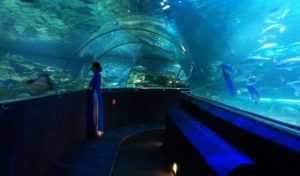 Океанариум Винперл