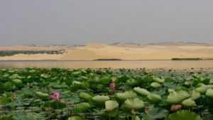 Озеро лотосов в Муйне