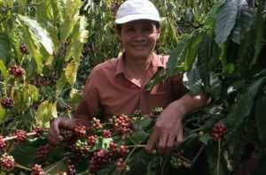 Выращивание кофе во Вьетнаме