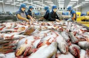 Цена на пангасиус во Вьетнаме бьёт рекорды