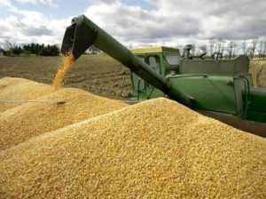 Экспорт зерна из России во Вьетнам увеличивается