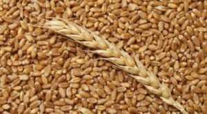Скоро импорт зерна во Вьетнам сократится