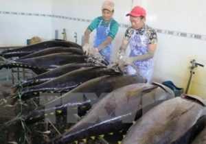 Провинция Тянь-Гьянь собирается произвести 98 тысяч тонн морепродуктов за 2017 год