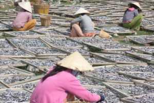 Развитие отрасли морской аквакультуры Вьетнама