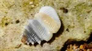 Во Вьетнаме обнаружен новый вид моллюсков