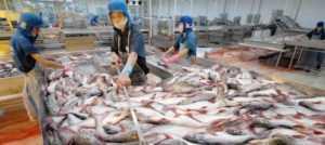 Экспорт пангасиуса из Вьетнама вырос