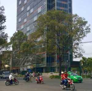 Власти Хошимина не в состоянии защитить деревья