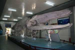 Музей океанографии в Нячанге