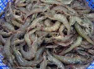 Вьетнам увеличил экспорт креветок в ЕС на 30 процентов