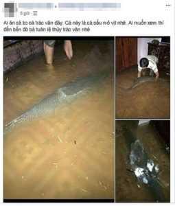 В жилом доме Вьетнама поймали рыбу-аллигатора