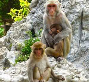 Поставки обезьян из Вьетнама в Россию
