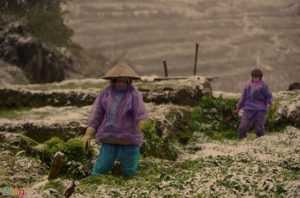 В Ханое ожидается прохладная погода и дожди