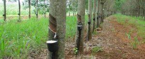 Доходы от экспорта каучука во Вьетнаме сократились