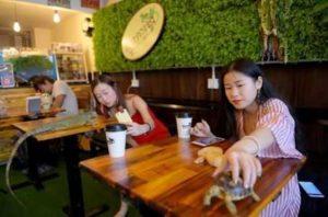 В Камбодже открылось кафе с рептилиями
