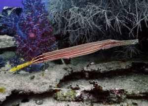 Обитатели Южно-Китайского моря