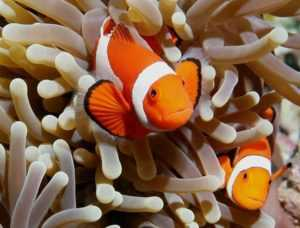 В Южно-Китайском море очень много хищных рыб