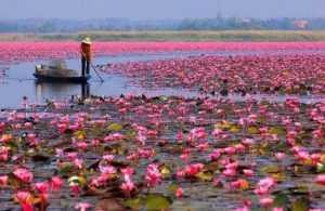 Озеро лотосов во Вьетнаме