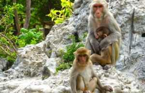 Экскурсия на острова Няфу из Нячанга