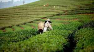 Что купить во Вьетнаме в Нячанге?