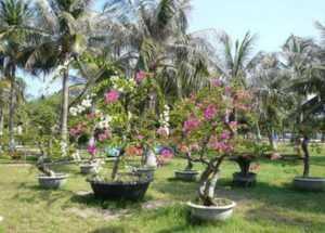 Остров Хон Хео