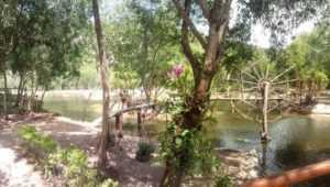 Остров орхидей