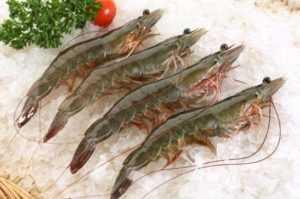 Япония увеличивает импорт креветок из Вьетнама