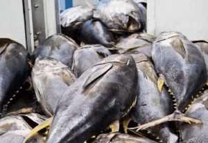 Экспорт тунца из Вьетнама за первый квартал вырос