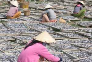 Во Вьетнаме вышел указ об управлении аквакультурой
