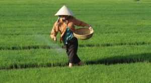 Экспорт риса из Вьетнама в Иран