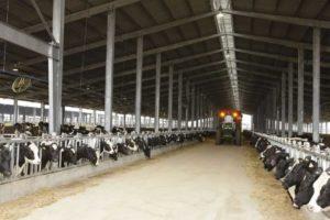 Компания TH True Milk из Вьетнама построит дополнительные фермы