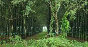 Сохранение лекарственных растений в Ninh Thuan