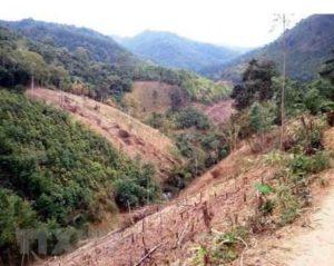 Незаконная вырубка лесов в провинции Dak Lak