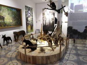 В провинции Нге Ан открылся музей природы и культуры