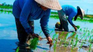 В 2018 году Вьетнам экспортировал риса на 3,15 млрд $