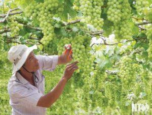 Фестиваль винограда и вина 2019