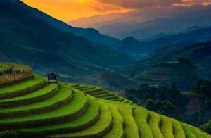 Во Вьетнаме прошла ежегодная рисовая конференция