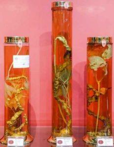 В Хошимине открылся музей женьшеня