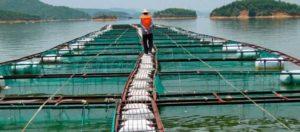 В провинции Кханьхоа используют последние разработки для морской аквакультуры