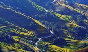 Великолепные террасы рисовых полей, признанных объектом национального наследия в сентябре 2012 года