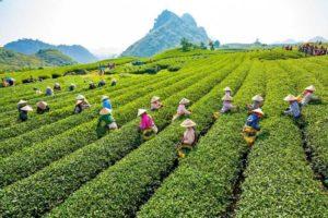 Австралийские компании заинтересованы в инвестициях в сельскохозяйственный сектор Вьетнама